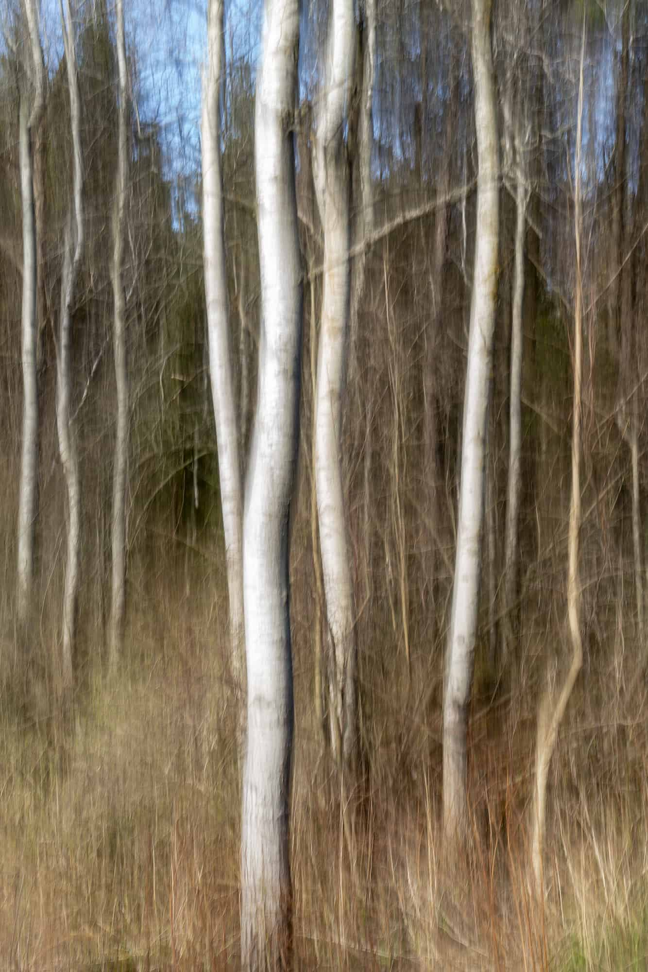family woods (shaman)